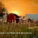 steinbach corn maze at sunset